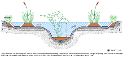 Natural pond drawings progetto stagno naturale for Piante da stagno