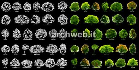 Fiori 3d Archweb.Abaco Degli Alberi Dwg