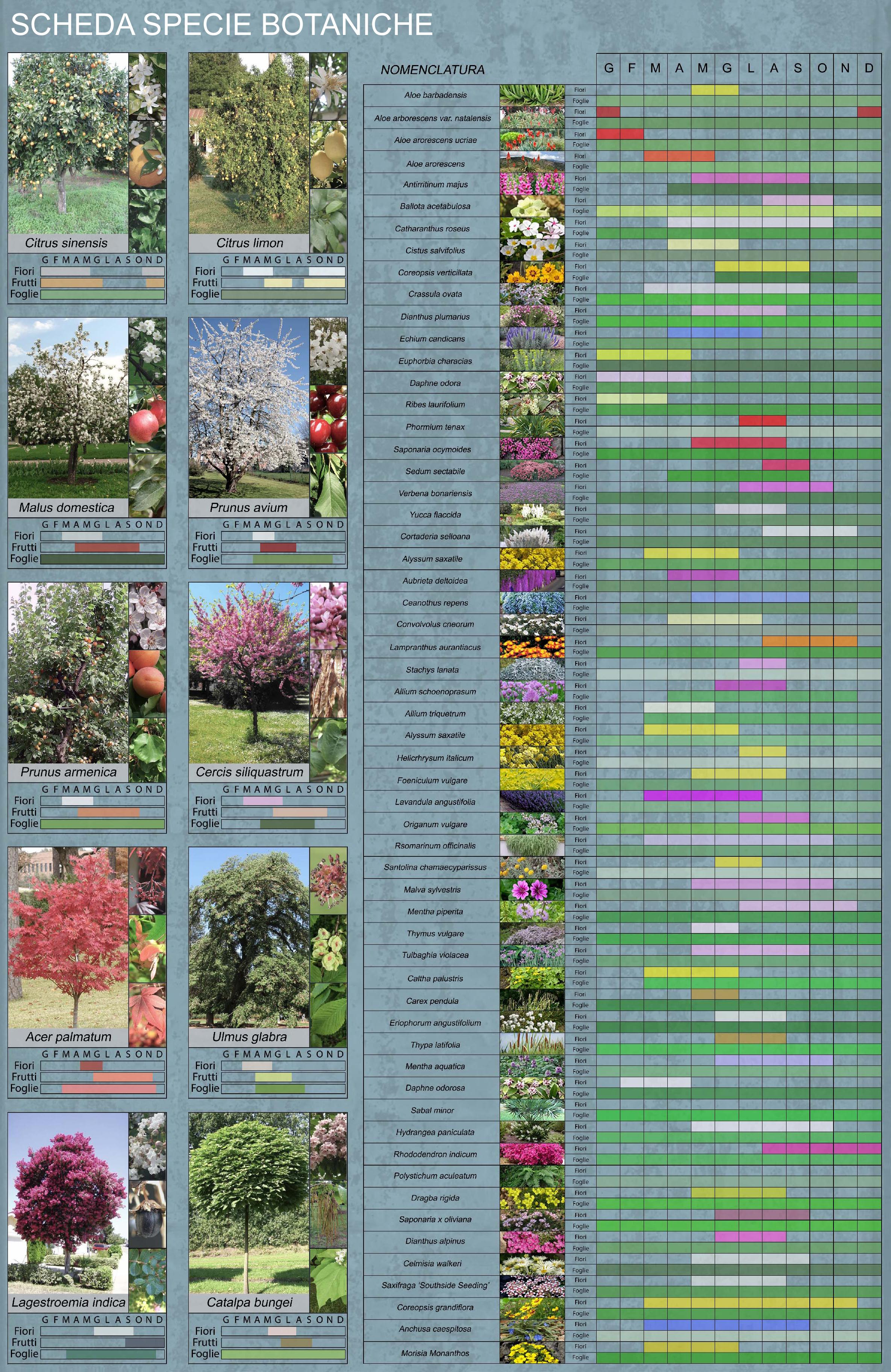 Fiori 3d Archweb.Schede Delle Specie Botaniche